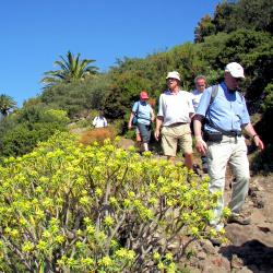 Wandergruppen auf Teneriffa